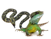 Reptiles and Lizards